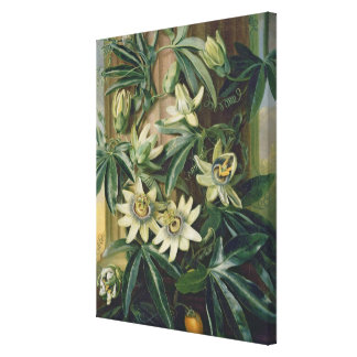 Blue Passion Flower for the 'Temple of Flora' by R Canvas Print