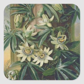 Blue Passion Flower for the Temple of Flora by R Square Sticker