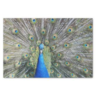 Blue Peacock Full Plumage Tissue Paper