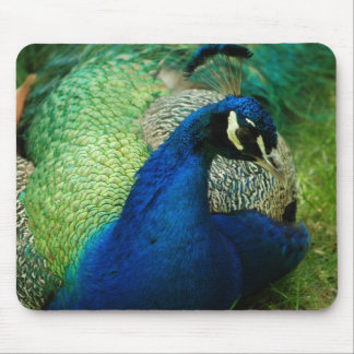 Blue Peacock Mouse Pad