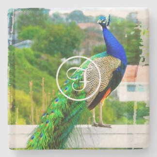 Blue peacock photo custom monogram stone coaster