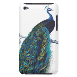 Blue Peacock with beautiful tail feathers Barely There iPod Case