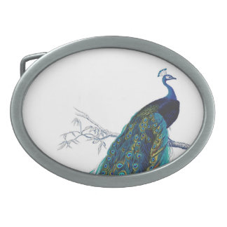 Blue Peacock with beautiful tail feathers Belt Buckles