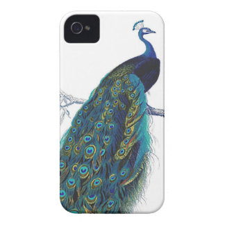 Blue Peacock with beautiful tail feathers iPhone 4 Cover