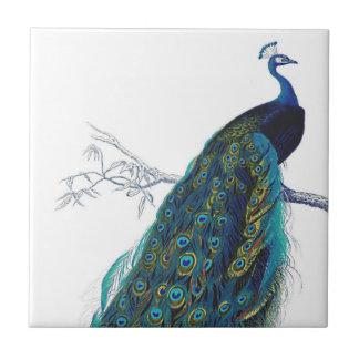 Blue Peacock with beautiful tail feathers Tile