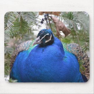 Blue Peafowl Bird Mouse Pad