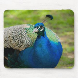 Blue Peafowl Mousepads