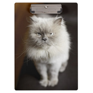 Blue Point Himalayan Cat looking irritated Clipboard