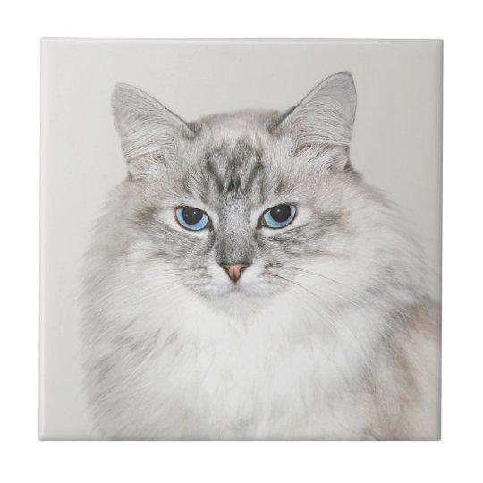 Blue point Himalayan cat Tile