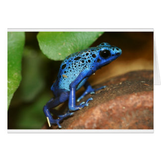blue poison arrow frog card