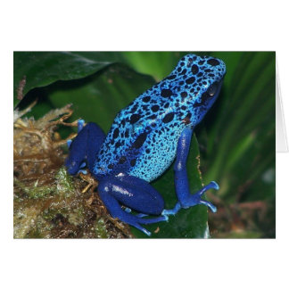 Blue Poison Arrow Frog Portrait Card