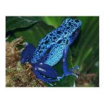 Blue Poison Arrow Frog Portrait Post Cards