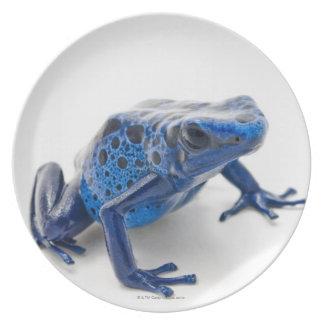 Blue Poison Dart Frog (Dendrobates Tinctorius) Dinner Plate