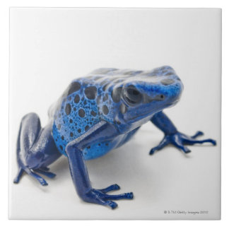 Blue Poison Dart Frog (Dendrobates Tinctorius) Large Square Tile