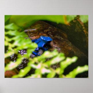 Blue Poison Dart Frog Print