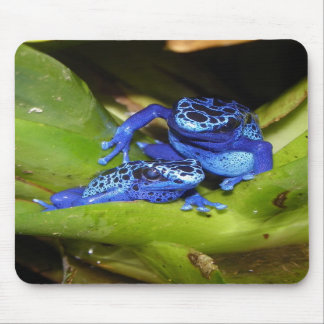 Blue Poison Dart Frogs In Leaf 1 Mouse Pads