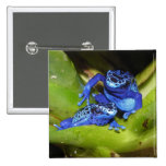 Blue Poison Dart Frogs In Leaf 1 Pinback Buttons