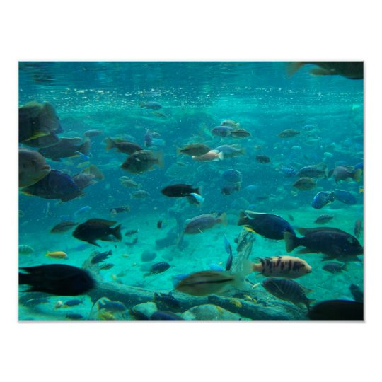 Blue pool of cichlids swimming around design poster