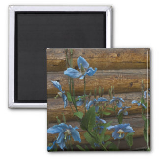Blue Poppies Refrigerator Magnets
