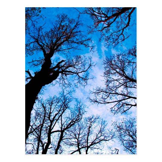 BLUE POWER OF TREE POSTCARD