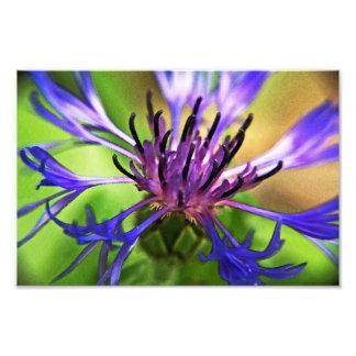 Blue Purple Flower Photo Print