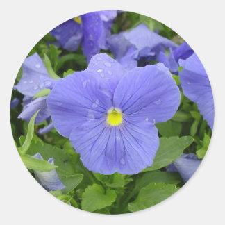 Blue/Purple Pansy Sticker
