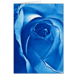 Blue Rose Cards
