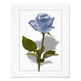 Blue Rose of Enchantment Photo Print