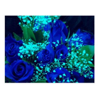 blue rose post cards