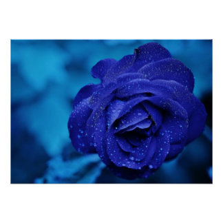 Blue Rose with Dew Drops Poster