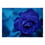 Blue Rose with Dew Drops Print