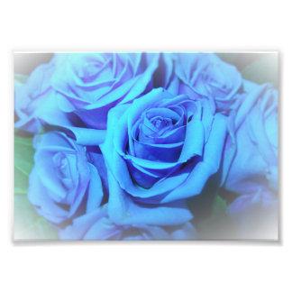 Blue Roses Photo Print