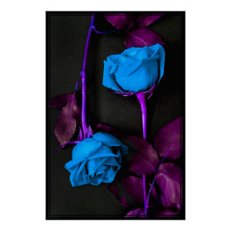 Blue Roses Poster -40x60 -other sizes available