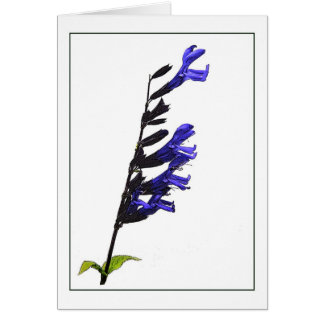 Blue Salvia Botanical Note Card