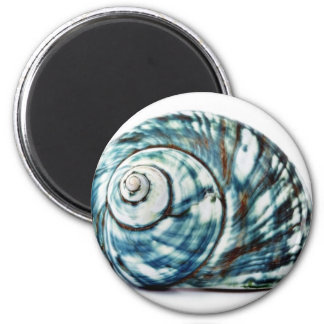 Blue Sea Shell On White Background Magnet