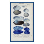 blue seashells vintage botanical French ocean art Poster
