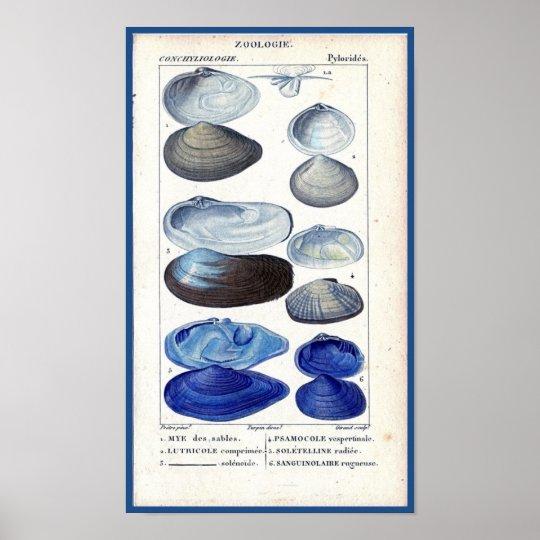 blue seashells vintage botanical French ocean art Poster