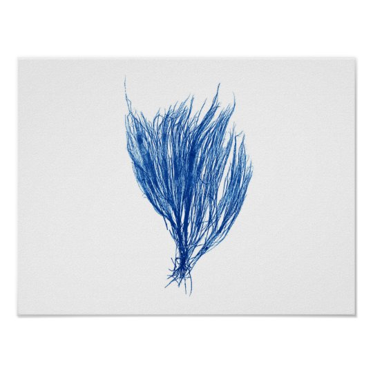 Blue Seaweed #2 size 42x32cm Poster