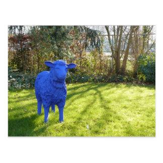 Blue Sheep I Postcard
