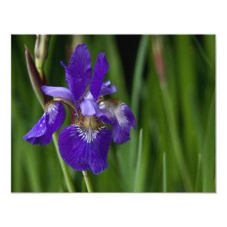 Blue Siberian Iris 11 Cm X 14 Cm Invitation Card