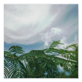 Blue Sky, Cloud, Mimosa Tree Poster