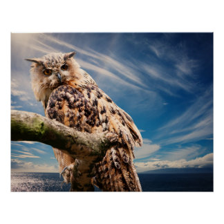 Blue Sky Clouds Owl Wildlife Nature Poster