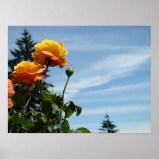 Blue Sky Fine Art Prints Orange Roses Garden Print