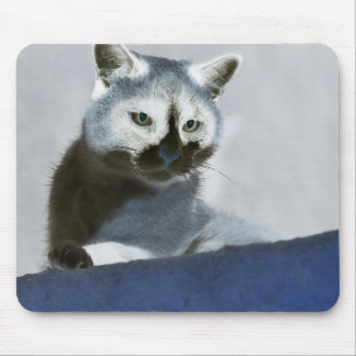 Blue Snow Shoe Cat on the Prowl Mouse Pad