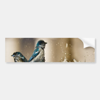 Blue Sparrows Bumper Stickers