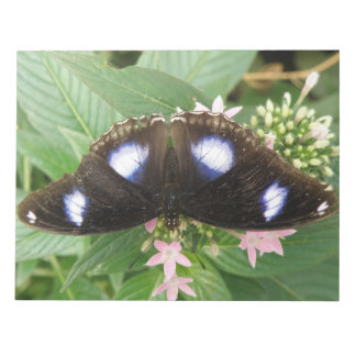 Blue Spotted Butterfly Notepad
