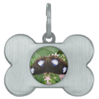 Blue Spotted Butterfly Pet Tag