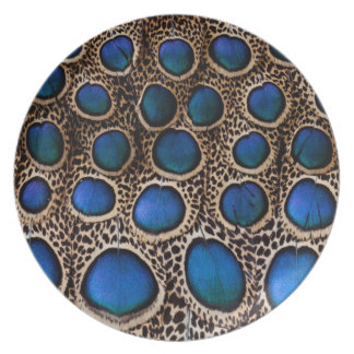 Blue spotted peacock pheasant plate