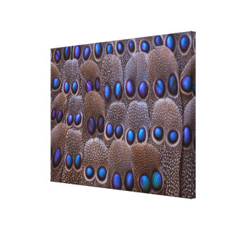 Blue spotted pheasant feather canvas print