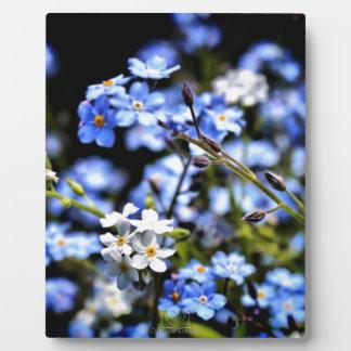 Blue Spring Plaque